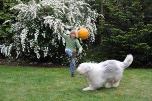 Gartenzaun-bietet-Sicherheit-300x200 Zaunbau heute
